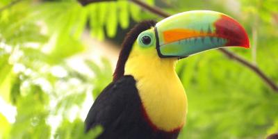 la-magie-du-costa-rica-toucan