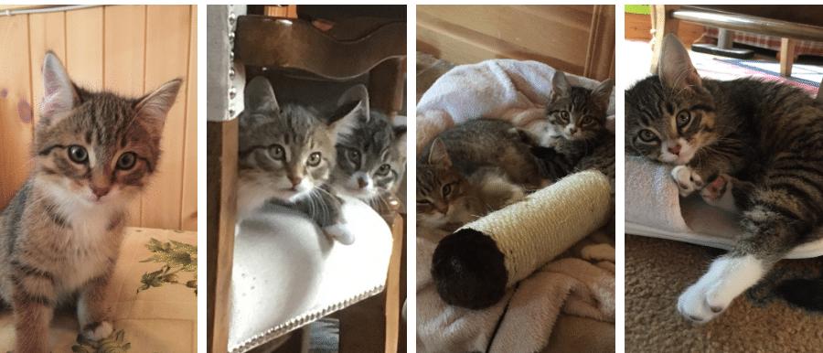 Le conte des petits chatons